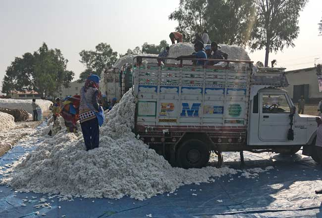 Cotton-Truck-at-gin